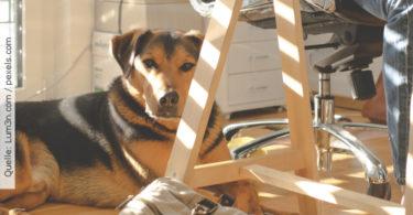 Buerohund_HundimBuero
